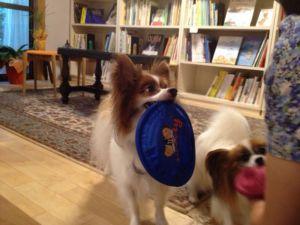 遊んでもらう看板犬